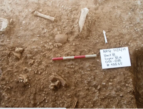 New prehistoric human unknown to science discovered in Israel