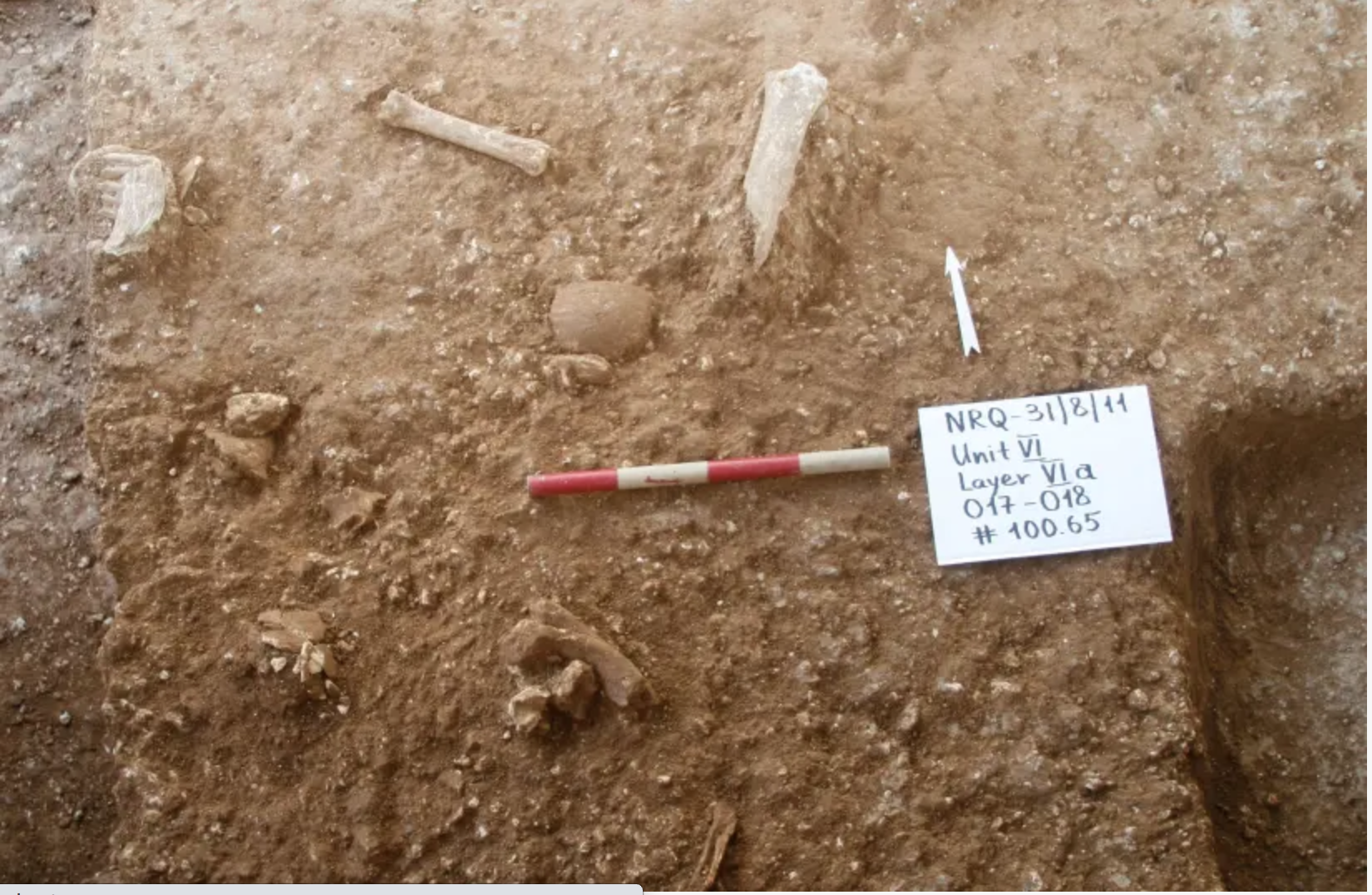 Skull found at the site among other items at Nesher Ramla. (photo credit: DR. YOSSI ZAIDNER)